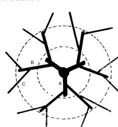 Sistemas de Poda em Fruteiras