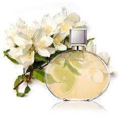 Contratipo de Mujer nº 6 para hacer perfumes.