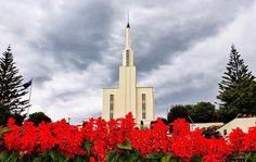Hamilton New Zealand temple Mormon Temples, Lds Temples, Hamilton New Zealand, Milford Track, Latter Day Saints, Willis Tower, Cn Tower, Jesus Christ, Around The Worlds