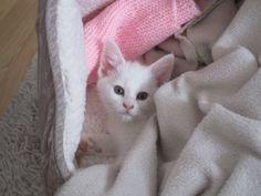 kandy as a kitten
