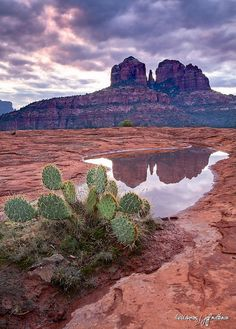 Cathedral Rock in Sedona, Arizona via flickr