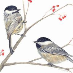 Pair of Chickadees Print by kvwilkinson on Etsy