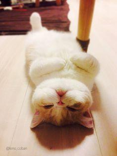 生まれて初めて床暖房を味わった猫の表情wwwwwwwww:ハムスター速報 | Something