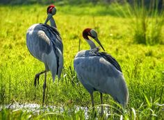 Bird animal nature wildlife photography site designed and created by Mukesh Garg to share unlimited focus work free download pictures blog post view reviews
