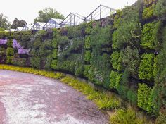 A beautiful exterior living wall planted with various herbs and medicinal plants. Horticulture, Vertical Garden Wall, Garden Privacy, White Gardens, Plant Wall, Parcs, Garden Spaces, Medicinal Plants, Ecology