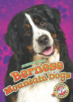 Bernese mountain dogs hail from the Swiss mountains where they hauled goods in carts through the valleys. Today, these intelligent dogs still love to use their drafting background by showing off their skills in competitions. This playful book for young readers highlights gentle Berners and what makes them stand out.