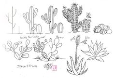 desert cactus drawing - Google Search