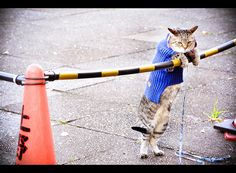 awesome cat is awesome                                                                                                            by Suck yeah!                                                  on Flickr