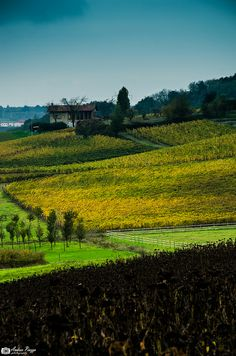 A spasso fra i vitigni del Gavi by Andrea Piazza, via Flickr. Creative Commons. Another beautiful vineyards shot by this photographer, Piemonte, Italy