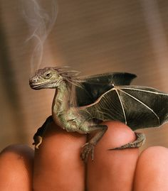 Young winged dragon- looks real