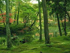 京都 西芳寺(苔寺)/Saiho-ji temple moss garden