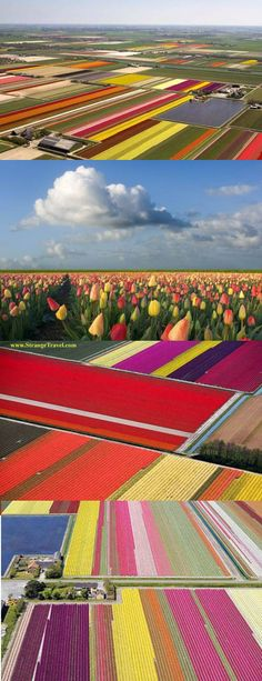 BEAUTIFUL COLORFUL TULIP FIELDS OF HOLLAND - WOW!