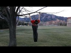 Urban Exercise Equipment - Tree Branches - Parkour Training and Conditioning - http://www.thehowto.info/urban-exercise-equipment-tree-branches-parkour-training-and-conditioning/