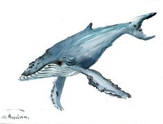 Humpback Whale, original watercolor painting, 9 X 12 in, grey blue whale art, sea animal art
