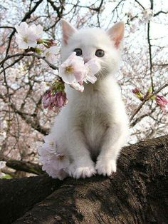 ✯ Precious Kitty