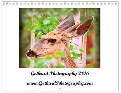 Gothard Photography 2016 Calendar - Colorado Wildlife (Size shown: 8.375 x 10.8.)