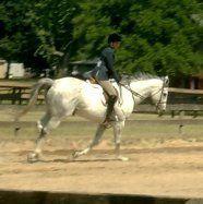 Fun Riding & Horse Training Games