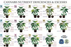 marijuana deficiency chart Medical Marijuana Project Idea Project Difficulty: Simple MaritimeVintage.com