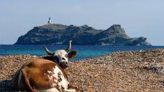 Le projet de parc naturel marin du cap Corse entre dans sa phase active