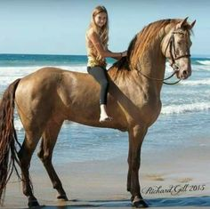 Top 10 Of Popular Horse Breeds in The World [No. 7 Awesome] Top 10 Of Popular Horse Breeds in The World [No. Beautiful Horse Pictures, Beautiful Horses, Animals Beautiful, Cute Horses, Horse Love, Animals And Pets, Cute Animals, Majestic Horse, All The Pretty Horses