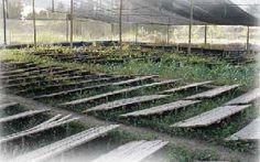 snails farm