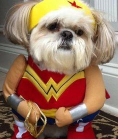 Shockingly cute: 159 pets dressed for Halloween (Susan Webster)