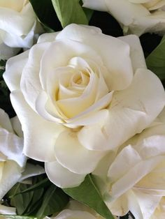 Garden Flowers - Annuals Or Perennials Ano Novo - Branco Novo Mais Love Flowers, My Flower, White Flowers, Flower Power, Pretty Roses, Beautiful Roses, Beautiful Gardens, Bloom, Parfum Rose