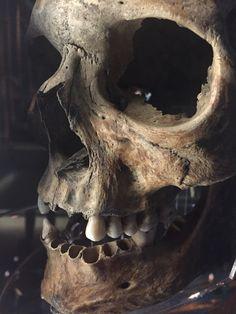 Scary skull from the Mary Rose ship Scary skull from the Mary Ros. Dark Fantasy Art, Dark Art, Gotik Tattoo, Tattoo Caveira, Skull Reference, Skull Anatomy, Skull Artwork, Skull Drawings, Totenkopf Tattoos
