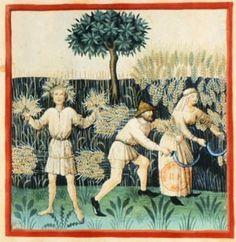 Tacuinum Sanitatis, ca. 1400 Summer  Bibliothèque nationale de France, Paris