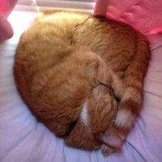 Orange Taby Cat Baby Boy Bean Leroy