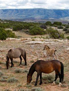 Photo story: Wild mustangs roam range atop Pryors