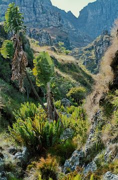 Chimanimani flora..... My country is beautiful