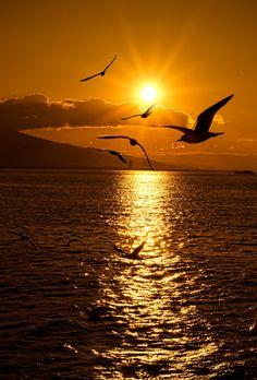 Seagulls-Sunset by Emre KAYA on 500px