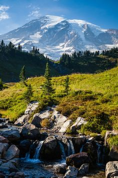 toofarnorth:  An old favorite above Myrtle Falls in Rainier - toofarnorth