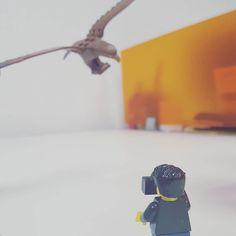 Fotografiando un águila #Lego #legogram #CDMX