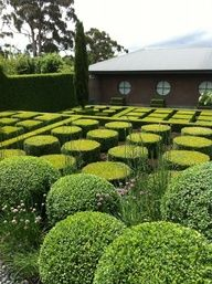 maze of boxwoods - paul bangay's garden at Stonefields.love how the hedges mimic the windows. Boxwood Garden, Garden Hedges, Topiary Garden, Garden Art, Boxwood Topiary, Formal Garden Design, Garden Landscape Design, Landscape Architecture, Garden Landscaping