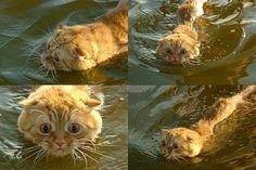Check this funny animal here: http://funnypicsofanimals.com/post/143494799785 #funny #animal #lol #haha #gif #fail