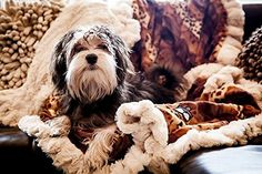 BESSIE AND BARNIE Pet Blanket Large Wild KingdomNatural Beauty with Ruffle * Check out the image by visiting the link.