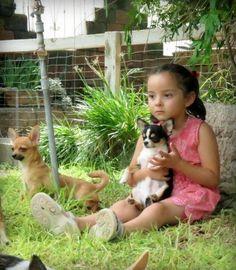 Encantador!  #niños #perros #chihuahuas