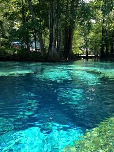 Ginnie Springs is a popular destination for scuba diving, snorkelling, canoeing and There is an onsite dive shop offering PADI scuba diving training. Vacation Places, Dream Vacations, Vacation Spots, Beautiful Places To Travel, Cool Places To Visit, Florida Travel, Florida Tourism, Florida Keys, Fantasy Landscape