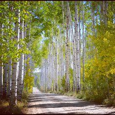 Wyoming - Aspen Alley