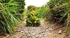 "Photo ""LonelyTree"" by TyBellosFotography Ireland, Plants, Photography, Photograph, Fotografie, Photoshoot, Irish, Plant, Planets"