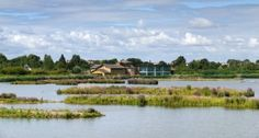 London Wetland Centre, Barnes    London Wetland Centre brings the countryside to London. Although close to the heart of the capital it is a haven of tranquility for both wildlife and people.