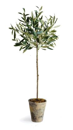 If you look at farmhouse style homes, you will most likely see touches of greenery whether it's faux or real. Here are five faux plants that will add wonderful touches to your decor (and they don't require a green thumb). House Plants Decor, Plant Decor, Faux Plants, Indoor Plants, Olive Plant, Faux Olive Tree, Indoor Olive Tree, Decor Around Tv, Potted Trees
