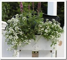 love this White Planter and Fleur De Lis gives it an extra touch! Container Flowers, Container Plants, Container Gardening, Mailbox Planter, White Planters, Garden Gates, The Expanse, Flower Pots, Bloom