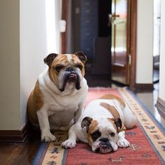 Meet William Potato McBacon & Polly Pringle Smalls, the adorable muses behind Damsel in Dior's William Necklace and Polly Studs.