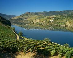 Vineyards at the Douro region, the origin of the world famous Port wine. A UNESCO World Heritage Site, Portugal