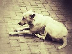 Canine residents of the complex... #dog #snapseed #grunge #filters