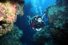 Ranked no. 1 by PADI as a top dive destination and featuring on almost every divers must-dive destination list, the island of Cozumel off the Mayan Coast o