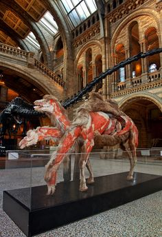 Animal Inside Out, Natural History Museum, London - what an anatomy lesson that would be!!
